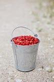 Άγριες φράουλες στοκ φωτογραφία με δικαίωμα ελεύθερης χρήσης