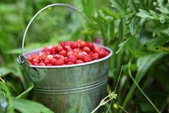 Άγριες φράουλες στοκ φωτογραφία