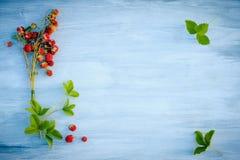 Άγριες φράουλες Στοκ Εικόνα