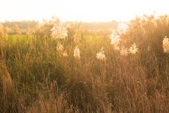 Άγριες χλόες, μικρό βάθος του τομέα Εκλεκτής ποιότητας επίδραση Όμορφη αγροτική φύση στοκ φωτογραφία