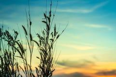 Άγριες χλόες, μικρό βάθος του τομέα Εκλεκτής ποιότητας επίδραση Όμορφη αγροτική φύση στοκ φωτογραφίες