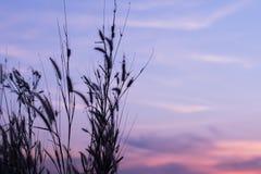 Άγριες χλόες, μικρό βάθος του τομέα Εκλεκτής ποιότητας επίδραση Όμορφη αγροτική φύση στοκ εικόνες