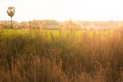Άγριες χλόες, μικρό βάθος του τομέα Εκλεκτής ποιότητας επίδραση Όμορφες αγροτικές άγριες χλόες φύσης στοκ φωτογραφία με δικαίωμα ελεύθερης χρήσης