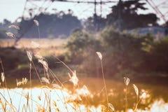 Άγριες χλόες φύσης στο χρυσό θερινό ηλιοβασίλεμα στοκ φωτογραφίες