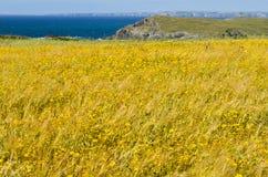 Άγριοι απότομοι βράχοι λιβαδιών λουλουδιών και ωκεάνιο υπόβαθρο στοκ εικόνα