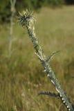 Άγριοι κάρδοι που αυξάνονται σε ένα λιβάδι στοκ φωτογραφία