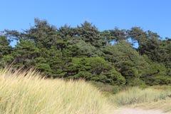 Άγριοι πράσινοι δέντρα και μπλε ουρανός χλόης ως υπόβαθρο Στοκ Εικόνα