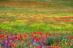 Άγριοι πράσινοι τομείς με τα λουλούδια στοκ εικόνες με δικαίωμα ελεύθερης χρήσης