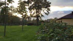 Άγριοι ροδαλοί θάμνοι, σπίτι, δέντρα που ταλαντεύονται, ηλιοβασίλεμα απόθεμα βίντεο