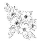 Άγριος αυξήθηκε λουλούδι ανθών sacura κερασιών canina Rosa απεικόνιση αποθεμάτων