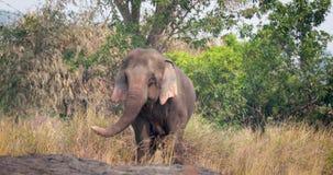 Άγριος βιετναμέζικος ελέφαντας στη ζούγκλα απόθεμα βίντεο