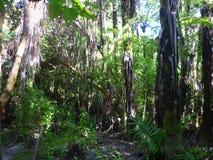 Άγριος θάμνος στη Νέα Ζηλανδία στοκ φωτογραφίες με δικαίωμα ελεύθερης χρήσης