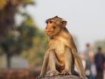 Άγριος πίθηκος σε Ankgor Wat Στοκ φωτογραφία με δικαίωμα ελεύθερης χρήσης