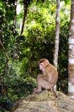 Άγριος πίθηκος στο εθνικό πάρκο Khoa Yai Στοκ Εικόνες
