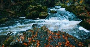 Άγριος ποταμός Doubrava στα χρώματα πτώσης, τοπίο φθινοπώρου απόθεμα βίντεο