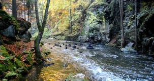 Άγριος ποταμός Doubrava στα χρώματα πτώσης, τοπίο φθινοπώρου φιλμ μικρού μήκους
