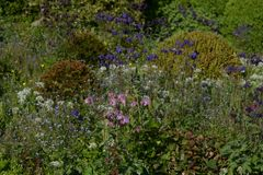 Άγριος πράσινος κήπος με τα λουλούδια και τους Μπους buxus Στοκ Εικόνες