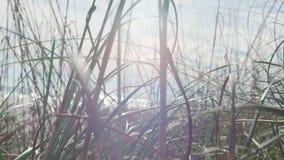 Άγριος στενός επάνω χλόης απόθεμα βίντεο