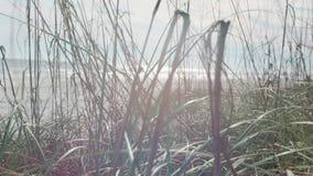 Άγριος στενός επάνω χλόης φιλμ μικρού μήκους