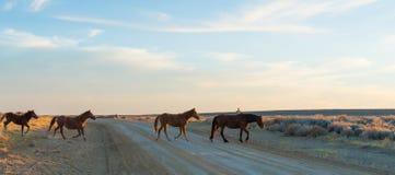 Άγριος φυσικός βρόχος αλόγων, Ουαϊόμινγκ Στοκ Φωτογραφίες