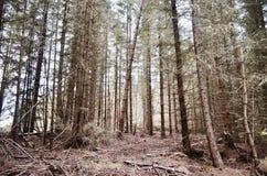 Άγριου και όμορφου δάσος φύσης, Σκωτία Στοκ φωτογραφίες με δικαίωμα ελεύθερης χρήσης