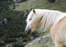 Άγριο άλογο κάστανων που στέκεται στη βροχή, δολομίτες, Ιταλία Στοκ Εικόνες