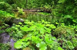 Άγριο δάσος στο εθνικό πάρκο Sumava Στοκ φωτογραφίες με δικαίωμα ελεύθερης χρήσης