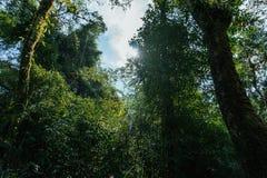 άγριο δάσος τραγουδιού φύσης αγάπης αγριόγαλλων Στοκ Εικόνα