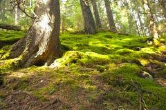 Άγριο δάσος Στοκ φωτογραφίες με δικαίωμα ελεύθερης χρήσης