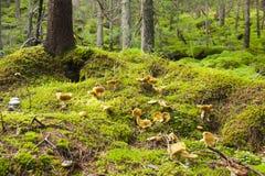 Άγριο δάσος Στοκ φωτογραφία με δικαίωμα ελεύθερης χρήσης