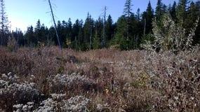 Άγριο δάσος Στοκ εικόνα με δικαίωμα ελεύθερης χρήσης