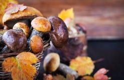 Άγριο δασικό εδώδιμο boletus μανιταριών στο καλάθι Στοκ Εικόνα
