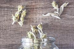 Άγριο βοτανικό τσάι βουνών Στοκ Εικόνες