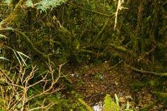 Άγριο δάσος στο ίχνος Inca σε Machu Picchu Περού τρισδιάστατος νότος τρία απεικόνισης αριθμού της Αμερικής όμορφος διαστατικός πο Στοκ Εικόνες