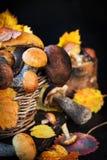Άγριο δασικό εδώδιμο boletus μανιταριών στο καλάθι Στοκ Φωτογραφίες