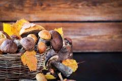Άγριο δασικό εδώδιμο boletus μανιταριών στο καλάθι Στοκ εικόνες με δικαίωμα ελεύθερης χρήσης
