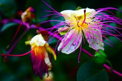 Άγριο εξωτικό λουλούδι που βρίσκεται σε ένα πεζοπορώ στοκ εικόνες