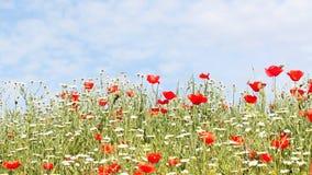 Άγριο λιβάδι λουλουδιών απόθεμα βίντεο