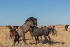 Άγριο κοπάδι αλόγων στην έρημο στοκ εικόνες