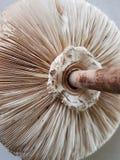 Άγριο κόκκινο ξηρό μανιτάρι Στοκ φωτογραφίες με δικαίωμα ελεύθερης χρήσης