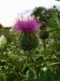 Άγριο λουλούδι στοκ φωτογραφία με δικαίωμα ελεύθερης χρήσης