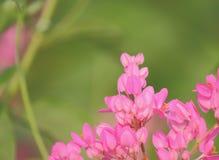 Άγριο λουλούδι, πράσινο υπόβαθρο Στοκ εικόνες με δικαίωμα ελεύθερης χρήσης
