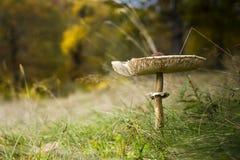Άγριο μανιτάρι Στοκ εικόνα με δικαίωμα ελεύθερης χρήσης