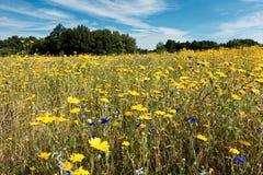 Άγριο μπάλωμα λουλουδιών Στοκ εικόνες με δικαίωμα ελεύθερης χρήσης