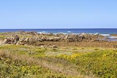 Άγριο νοτιοαφρικανικό σύνολο γραμμών ακτών των άγριων λουλουδιών Στοκ Εικόνα