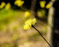 Άγριο λουλούδι με το bokeh Στοκ Εικόνα