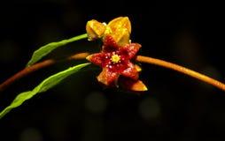 Άγριο λουλούδι Στοκ εικόνες με δικαίωμα ελεύθερης χρήσης
