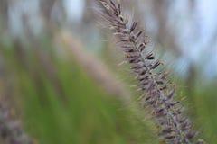 Άγριο λουλούδι Στοκ Εικόνα