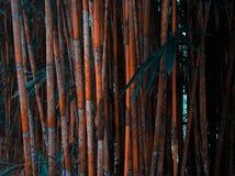 Άγριο πορτοκαλί μπαμπού στο ξύλο Στοκ φωτογραφία με δικαίωμα ελεύθερης χρήσης
