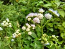 Άγριο πορφυρό τροπικό λουλούδι στοκ φωτογραφία